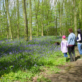 Rigsby Wood Open Day