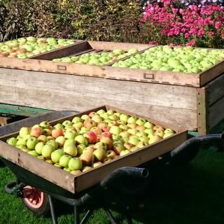 Apple Day at Gunby Hall & Gardens