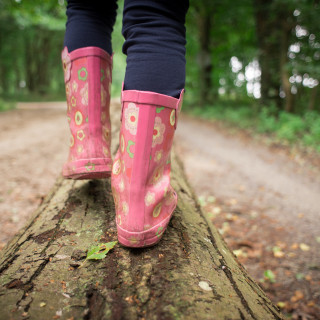 Guided Walk - Chambers Farm Wood