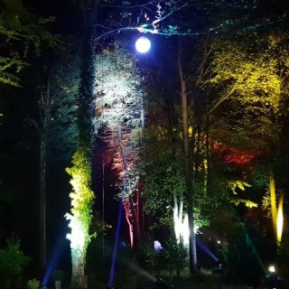 Enchanted Woodland Lights