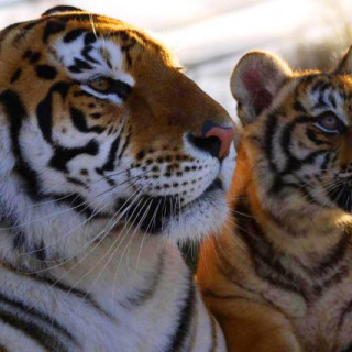 Discover Lincolnshire Weekend - Lincolnshire Wildlife Park