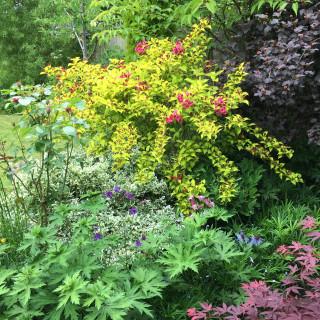Brinkhill Open Gardens